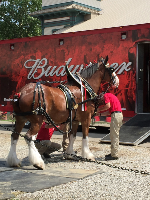 Bev Shaffer - Do Not Let What You Cannot Do - Budweiser Clydesdale Horses at Ohio State Fair
